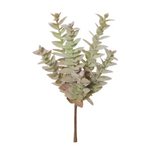 Eucy Succulent