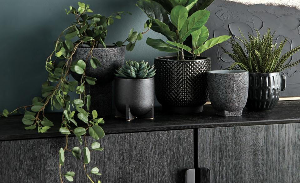 Cabana Style Green Plants